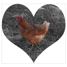 Heart Shaped Chicken Poster