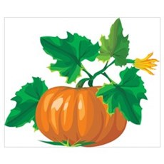 Beautiful Pumpkin Poster