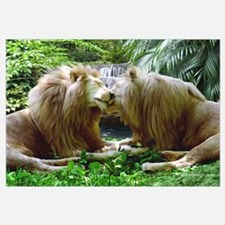 Affectionate Lions
