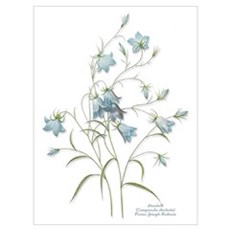 Harebells Canvas Art