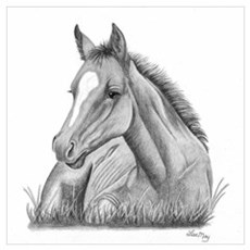 Resting Foal Poster