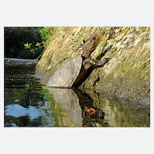 Pond Turtle Basking