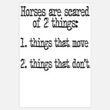Horses are scared of 2 things
