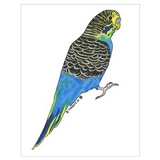 Blue Budgie Poster