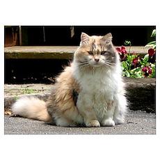 The Princess: Calico Cat Poster