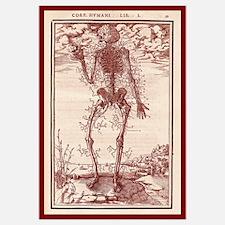 Vesalius Anatomy