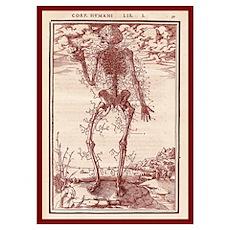 Vesalius Anatomy Poster