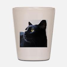 Black Cat in Profile Shot Glass