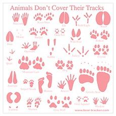 Pink Tracks Poster