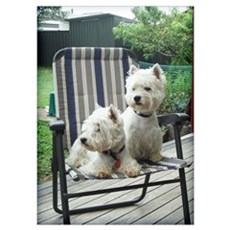 Westie Chair Pair Poster