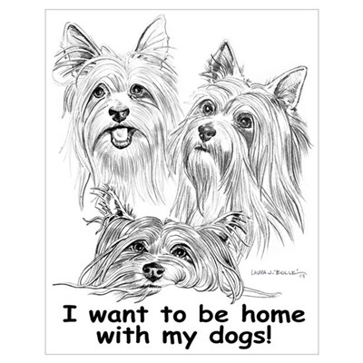 with silky terrier Poster