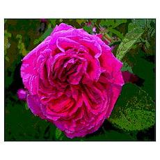 Inked Rose Poster