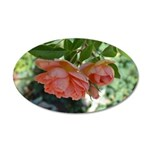 Peach Roses 38.5 x 24.5 Oval Wall Peel