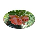 Beautiful Peach Roses 22x14 Oval Wall Peel