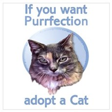 adopt Purrfection Poster