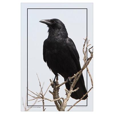 Fish Crow Poster
