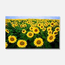 Sunflowers in field Car Magnet 20 x 12