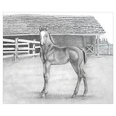 Fancy Foal Poster