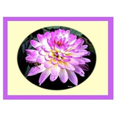 Crazy Love Dahlia Framed Print