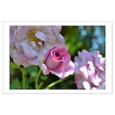 Romantic Pink Rose Large Poster