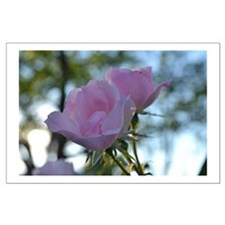 Light Pink Romantic Roses Large Poster