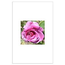 Beautiful Pink Rose Large Poster