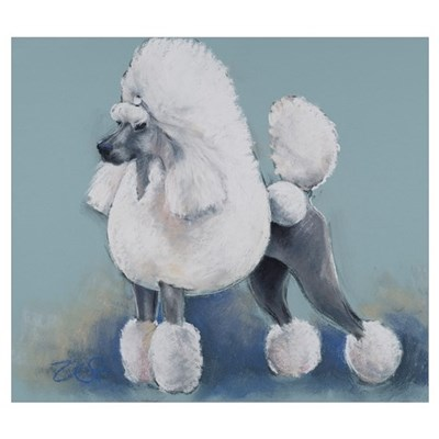 White Standard Poodle Poster