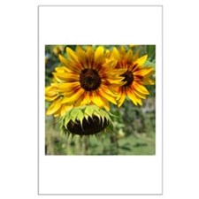 Sunflowers in Summer Large Poster