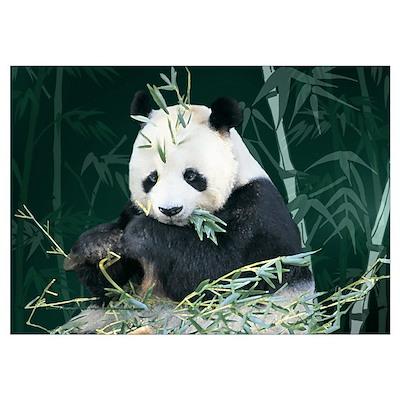 Panda With Bamboo Poster