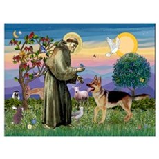 St Francis / G Shep Poster