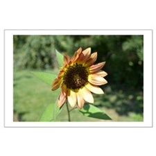 Pretty Sunflower Large Poster