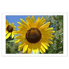 Beautiful Sunflower Large Poster