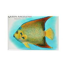 Queen Angelfish Rectangle Magnet