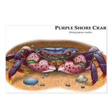 Purple Shore Crab Postcards (Package of 8)
