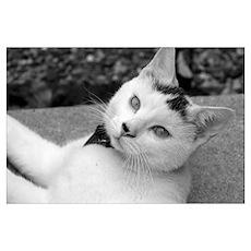 Cat #1 Poster