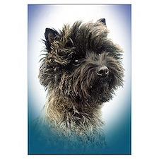 Cairn Terrier Top Champion Girl