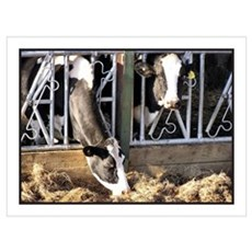 ...Cows... Framed Print