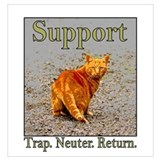 Feral cats Posters