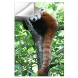 Red panda Wall Decals