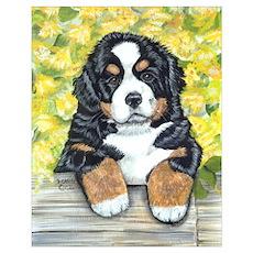Bernese Mountain Dog Fence Pu Poster