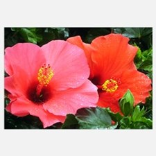 A Pair Of Hibiscuses