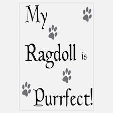 Purrfect...Ragdoll
