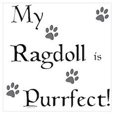 Purrfect...Ragdoll Poster
