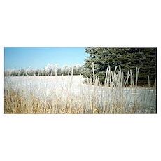 Frosty Fields & Trees Poster
