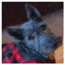 Scottish Terrier Canvas Art