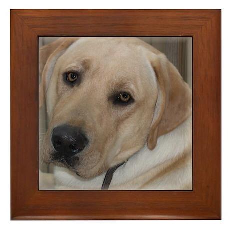 Male Labrador Retriver Framed Tile