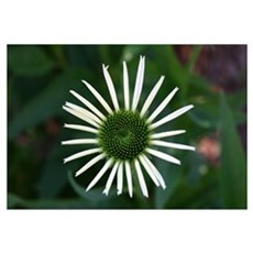 Flower Photo Art Gift Canvas Art
