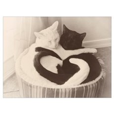 Love in Black & White Framed Print