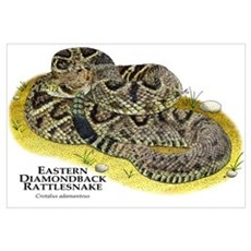 Eastern Diamondback Rattlesnake Canvas Art