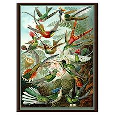 """Hummingbird Print"" Poster"
